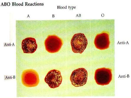 penggumpalan darah