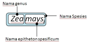 tata nama binomial