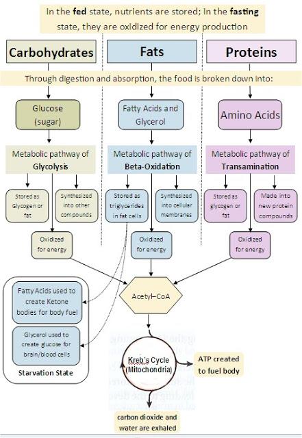Materi I Biokimia